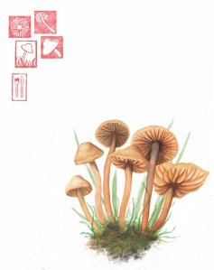 Fairy Ring watercolor by Anne Yen, © 2009 Anne Yen