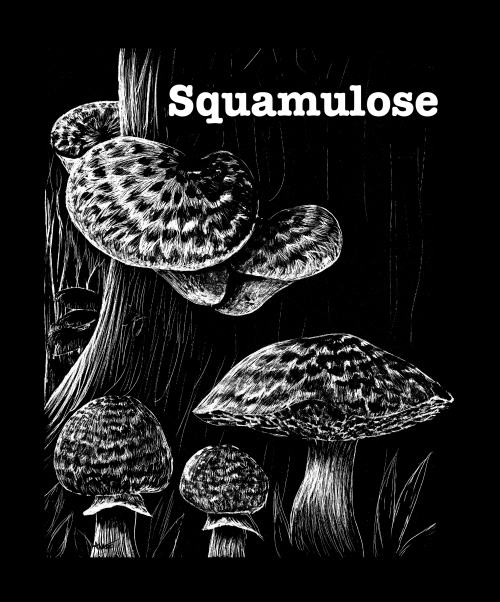 Today's word is Squamulose