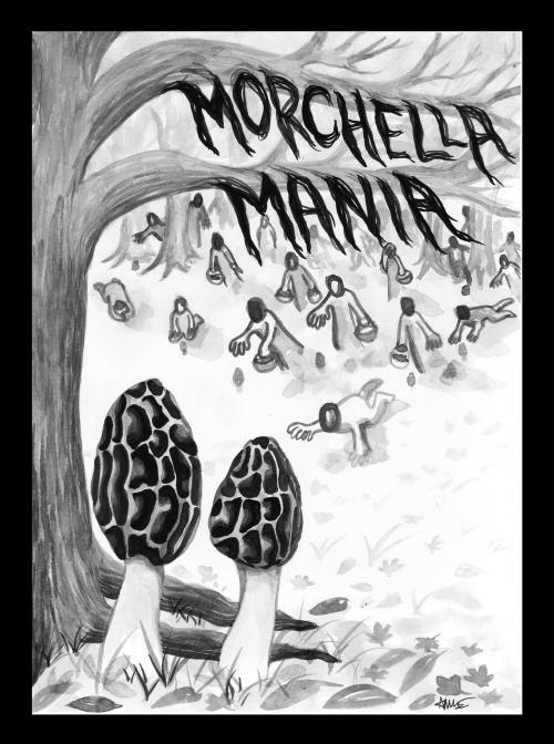 Morchella Mania in ink, by Anne Yen